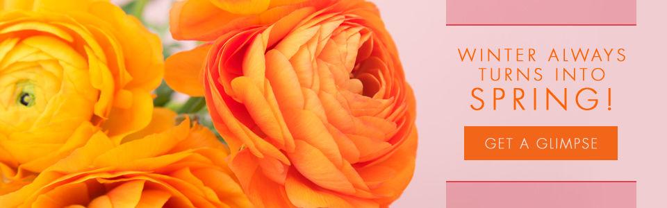 Spring Flowers Danvers, MA